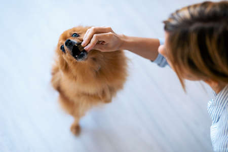 Close-up of young beautiful woman feeding her sweet dog playfuly in the living room floor at home.
