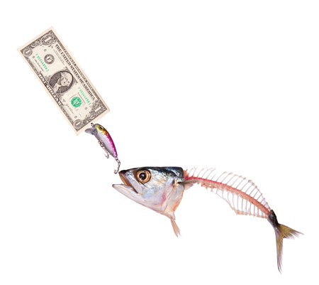 dead mackerel to eat banknote dollar on a hook isolated  Business photo