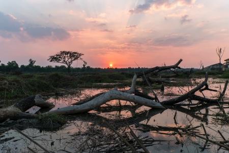 overturn: albero rovesciato in acqua al tramonto