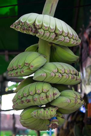 thep: Strange green banana fruit  Musa BBB cv   Thep phanom  in Thailand