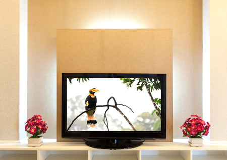 Modern TV stand (Great hornbilll) with shelves on the Brownish wall photo