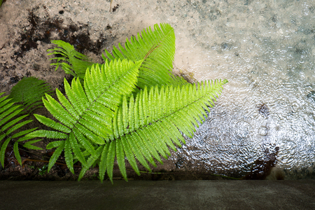 Rainforest fern, Fern leaf in the forest. photo