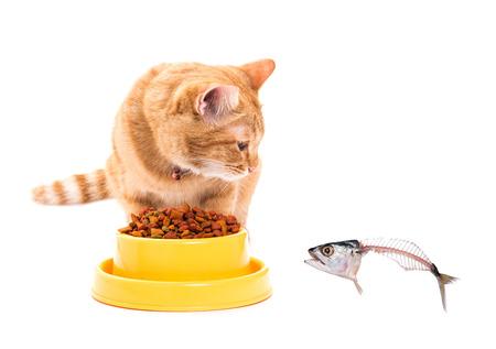 yellow thai cat looking mackerel. isolated white background photo