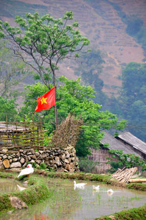 country side: Natural Country Side with Vietnam flag and ducks