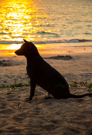 Silhouette of a dog on the beach at sunset photo