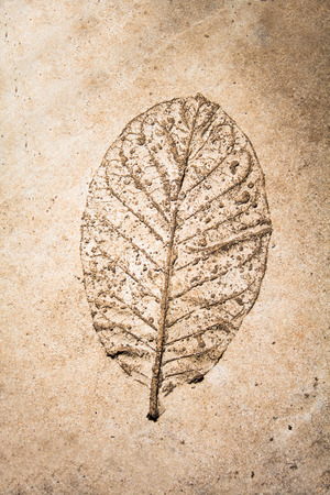 low relief: Low relief leaf on cement