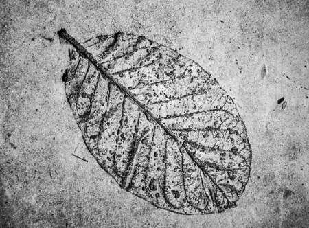 low relief: Low relief leaf on cement  black and white Stock Photo