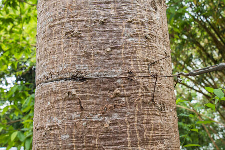 notch: Tree by wire for fasteners up a notch Stock Photo