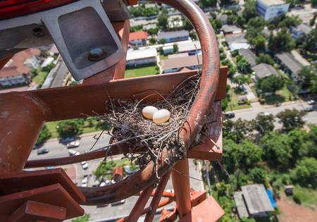 Bird eggs in a nest on the communication tower 73 meter high Stock Photo