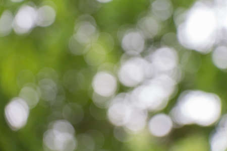 Abstract green nature background photo