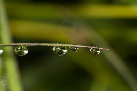 Drop water in the morning nature background photo