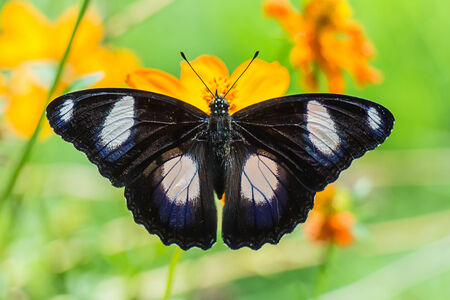 Butterfly perched atop the yellow flower photo