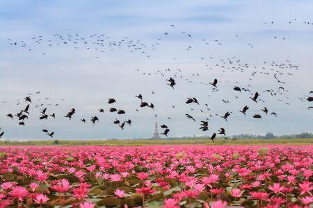 dank: World�s Strangest Lakes talay bua dank and bird Stock Photo