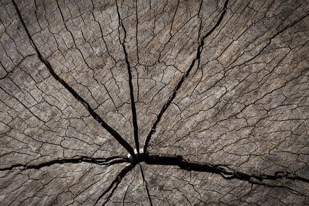 scarred: Old wood texture of cutted tree trunk vintage stlye