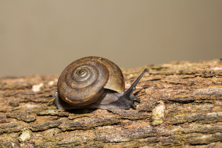 backgroung: Snail on wood backgroung Stock Photo