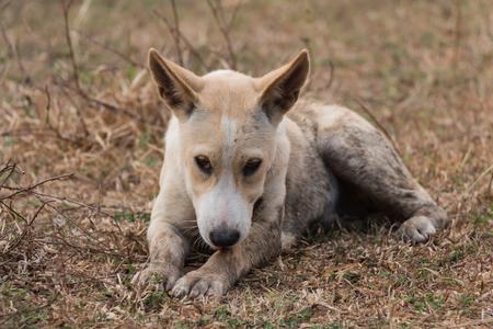 Hund Leckt Beine Zu Säubern Lizenzfreie Fotos Bilder Und Stock