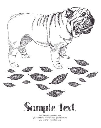 british bulldog: Bulldog card