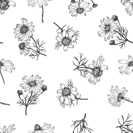camomile: Camomile background Illustration