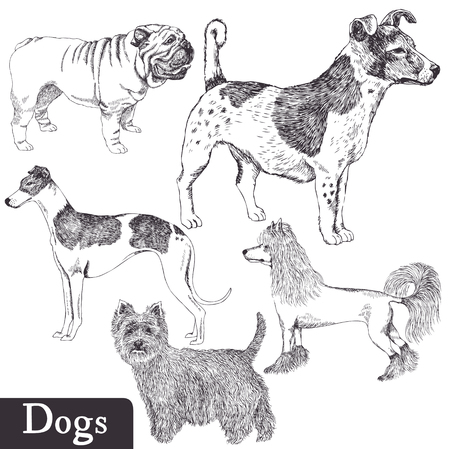 Breeds of dogs set Vector