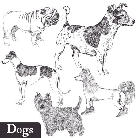 chart: Rasy psów ustawić Ilustracja