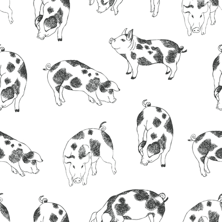 Cute little pigs background Vector