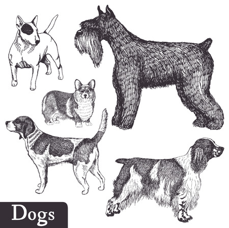 pembroke: Set of hand drawn dogs. Pen sketch. Vector illustration.