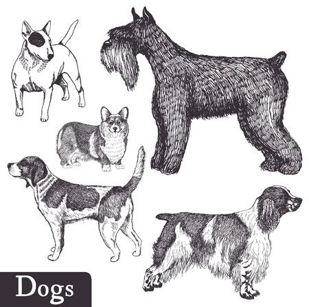 beagle: Set of hand drawn dogs. Pen sketch. Vector illustration.
