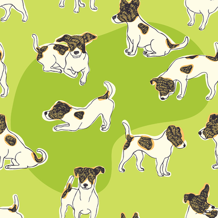discovering: Jack Russell Terrier background  Dogs on a green grass