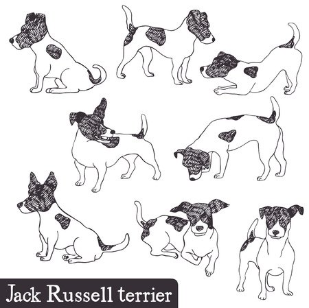 whelps: Jack Russell Terrier set. Hand drawn.
