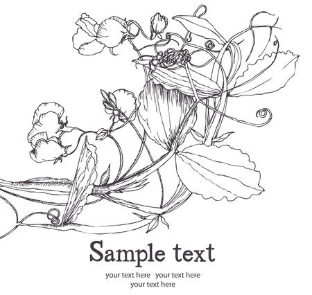 sweet pea flower: Sweet pea flower card. Hand drawn.