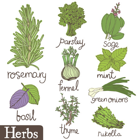 Herbs set.   Vector