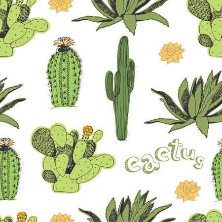 Cactus pattern. Hand drawing sketch. Cactus of different colors and shapes.