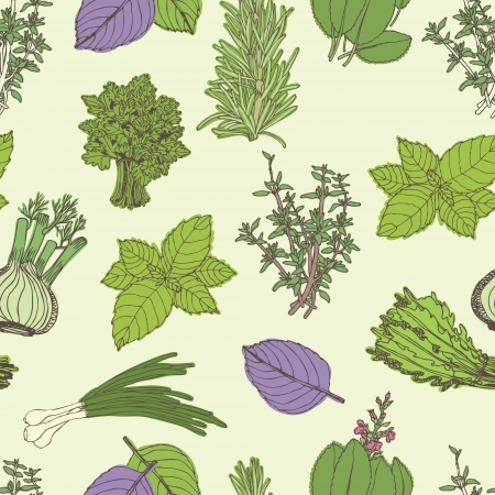 basil leaf: Herbs seamless pattern. Hand drawing sketch