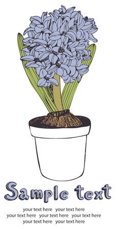 Blooming blue hyacinth, design card
