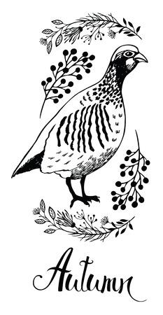 pheasant: Autumn design card with bird partridge and wild herbs, hand-drawn sketch