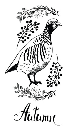 kuropatwa: Jesień wzór karty z ptaków kuropatwa i dzikich ziół, ręcznie rysowane szkic Ilustracja