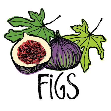 Fruits and leaves figs card Vector