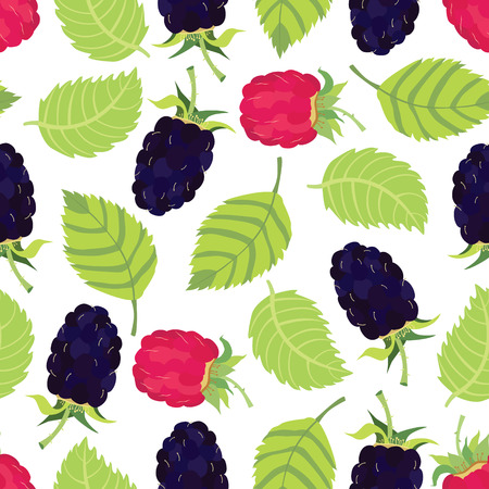 raspberry pink: Blackberry and raspberry background Fresh helthy food Illustration