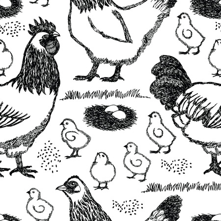 natural cock: Chicken farm Sussex hen Background Black and white color Illustration