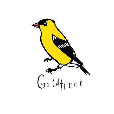 wading: Birds collection Goldfinch Color vector object