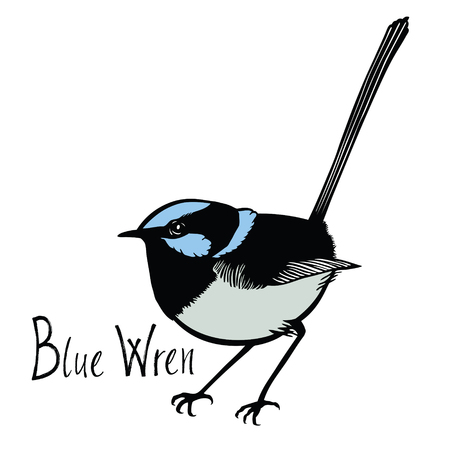 wade: Birds collection Blue Wren Color vector Isolated object