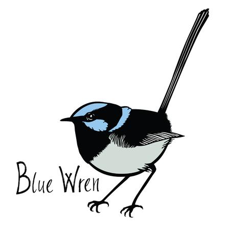 songbird: Birds collection Blue Wren Color vector Isolated object