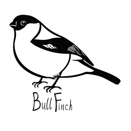 wade: Birds collection Bullfinch Black and white vector Isolated object