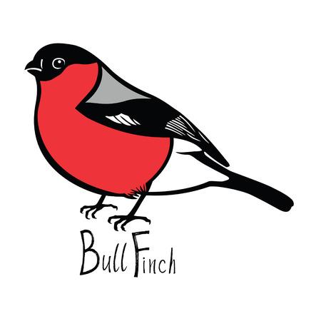 bullfinch: Birds collection Bullfinch Color vector Isolated object