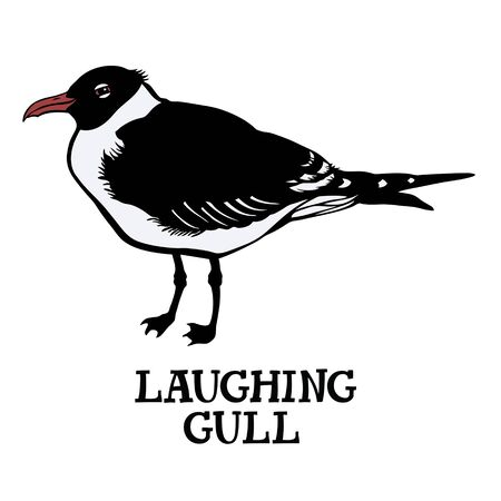 gull: Laughing gull Vector isolated object Cartoon drawing