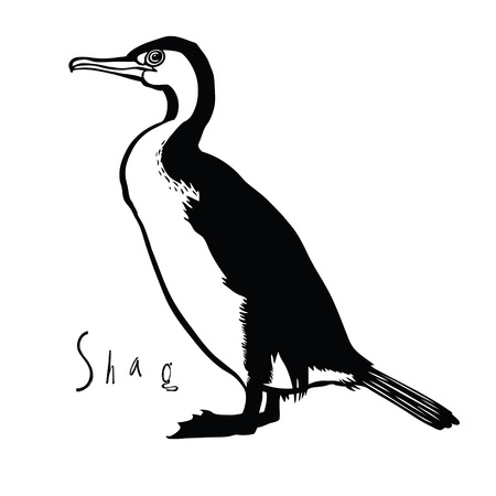 cormorant: Birds collection Shag Black and white colors Illustration