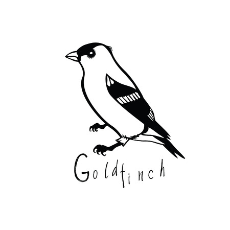 stout: Birds collection Goldfinch Black and white vector object