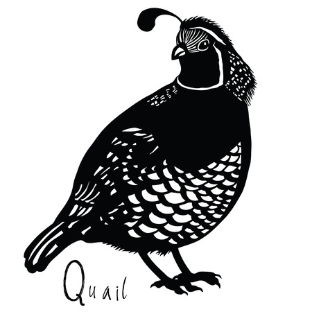 Birds collection Quail Black and white colors Imagens - 54773870