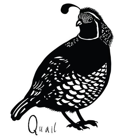 Kolekcja ptaków Przepiórka kolorach czarnym i białym