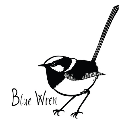 wade: Birds collection Blue Wren Black and white vector Isolated object Illustration